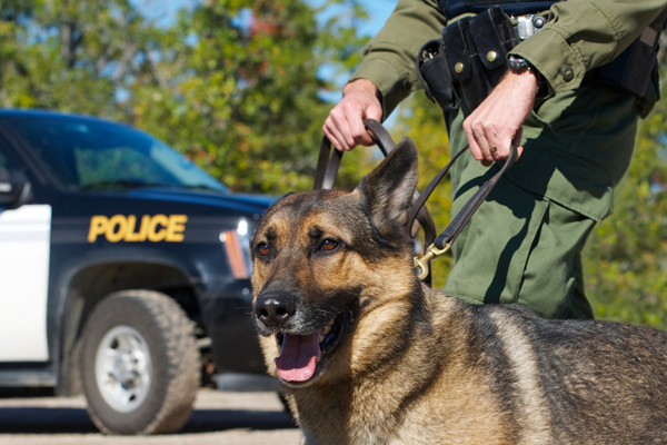 canine drug searches,canine drug searches lawyer,canine drug searches attorney,canine drug searches Utah